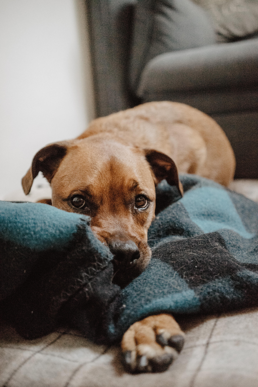 愛犬が癌と診断されたら迷わずこのフード!腫瘍対応食事療法食「みらいのドッグフード」