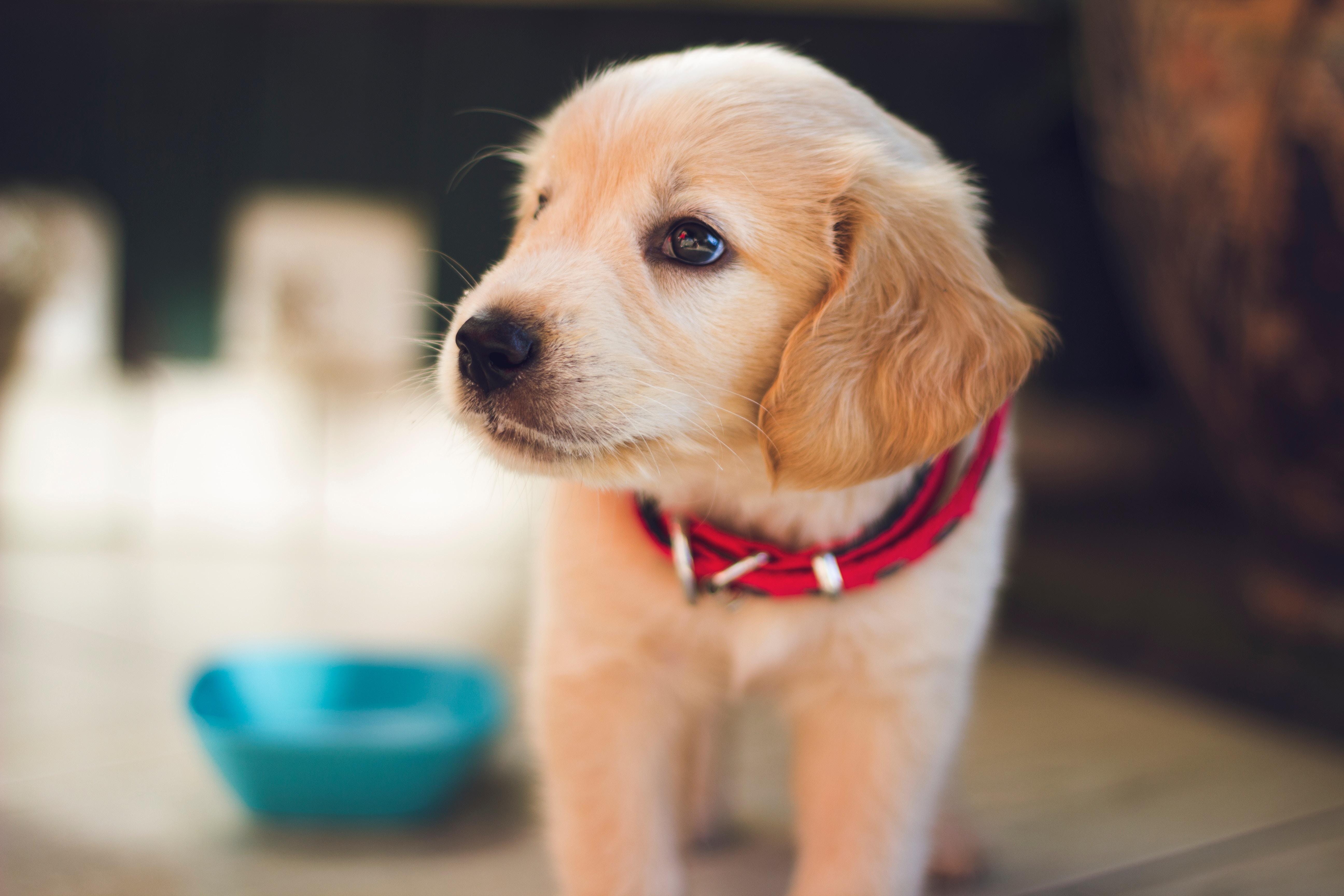 子犬期はしっかり栄養!オリジンパピーは小型犬、大型犬それぞれの子犬期に合わせたきめ細やかな内容で2種類