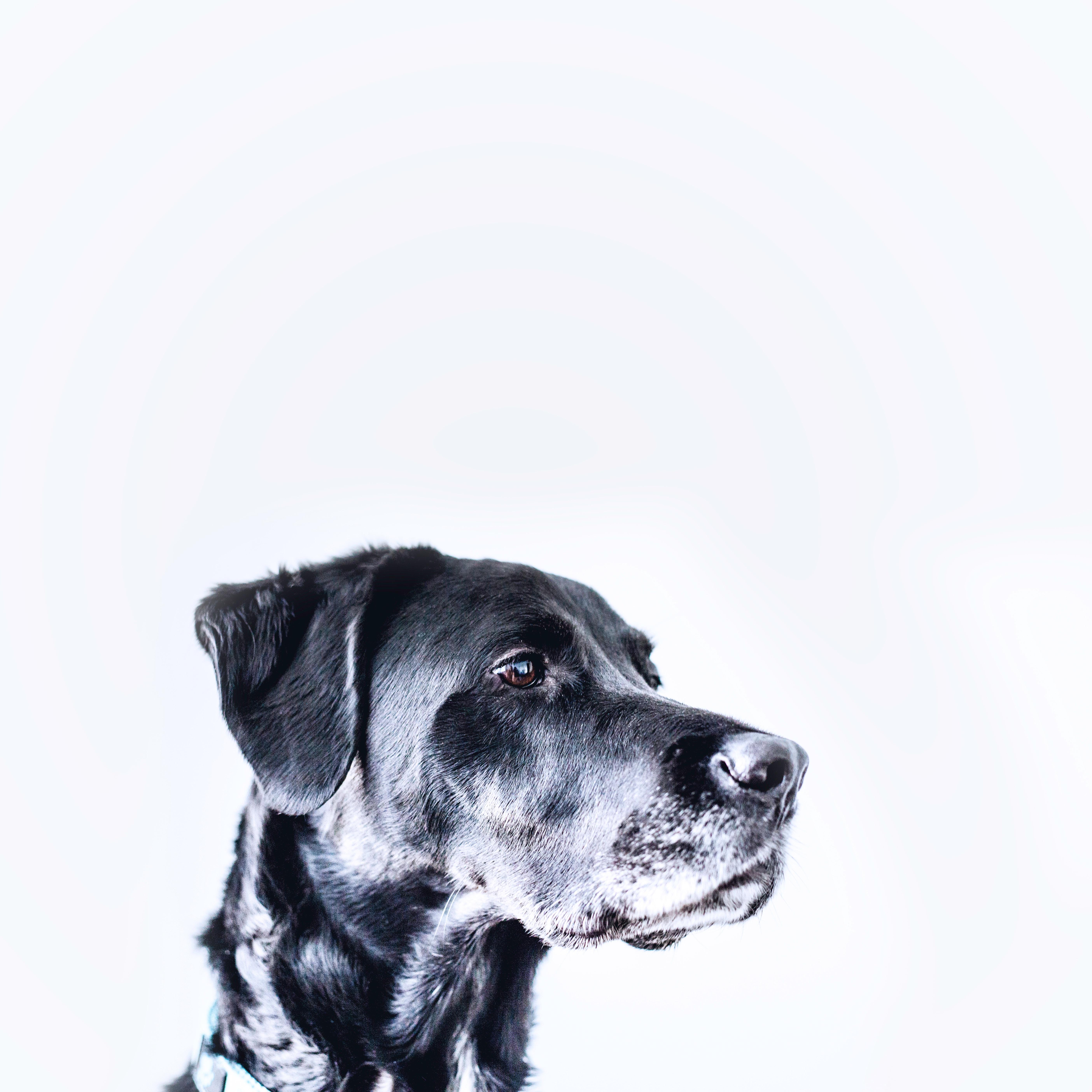 慢性的な腎臓病、肝臓病のケアにドイツ獣医師推奨ハッピードッグ「サノN」