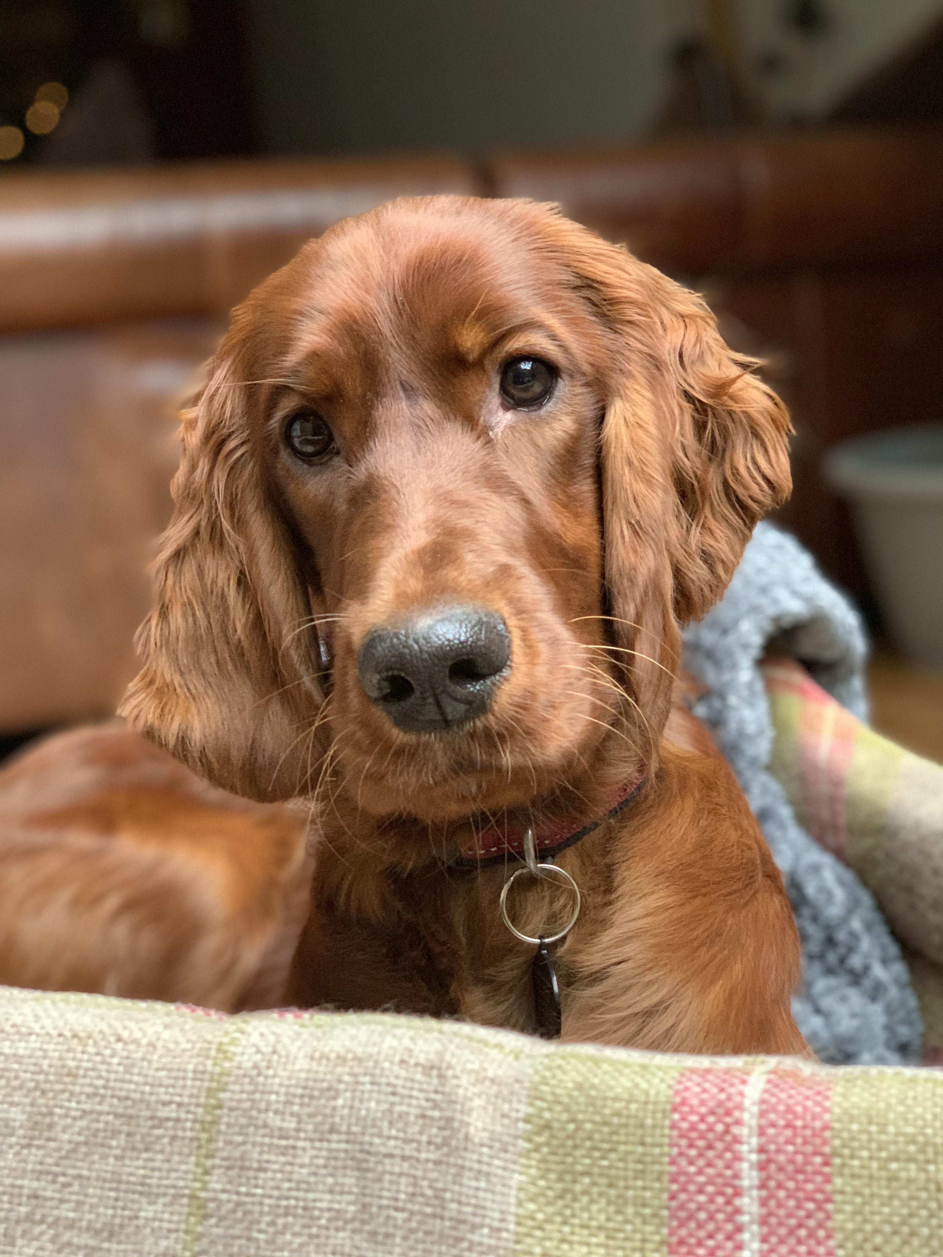 愛犬の白内障、緑内障予防に6つの有効成分配合のアイケアサプリ「毎日愛眼」
