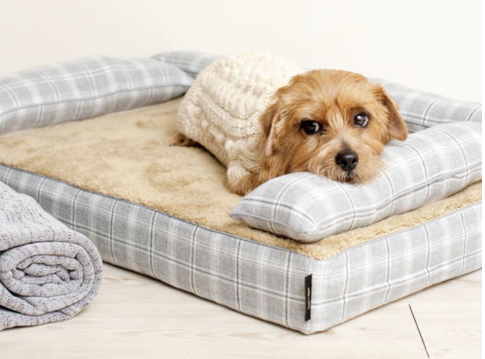 まるでドッグベッドのトゥルースリーパー!?「アンベルソ」はワンランク上の犬用ベッド