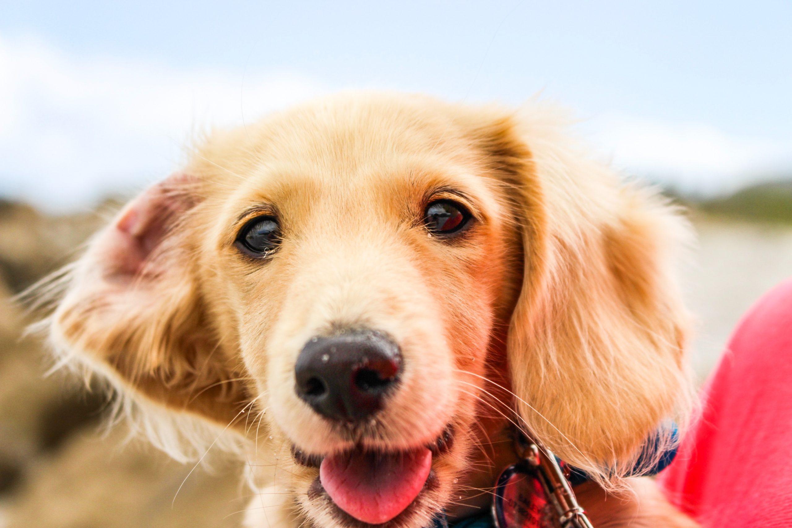 平飼いチキンの美味しさを愛犬に。原産国アメリカのドッグフード「HALOハロー」