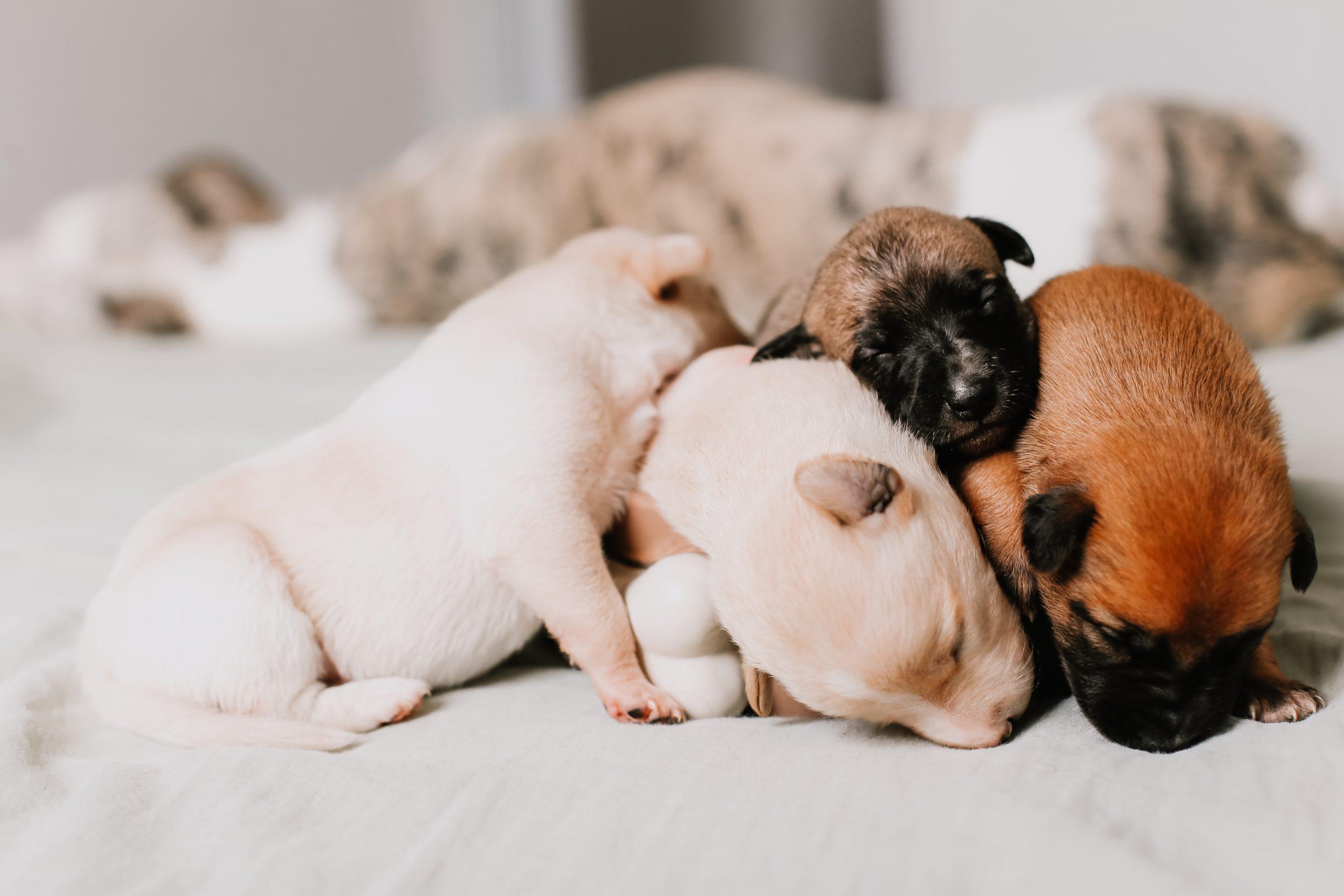 犬の成長期には子犬用ドッグフードが最適な理由