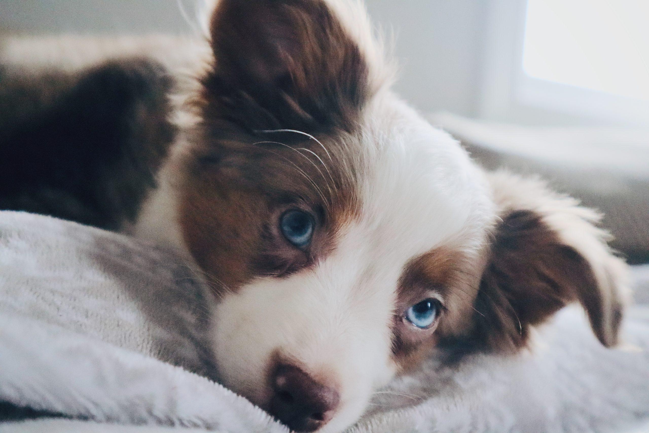 それは突然!犬の特発性前提疾患