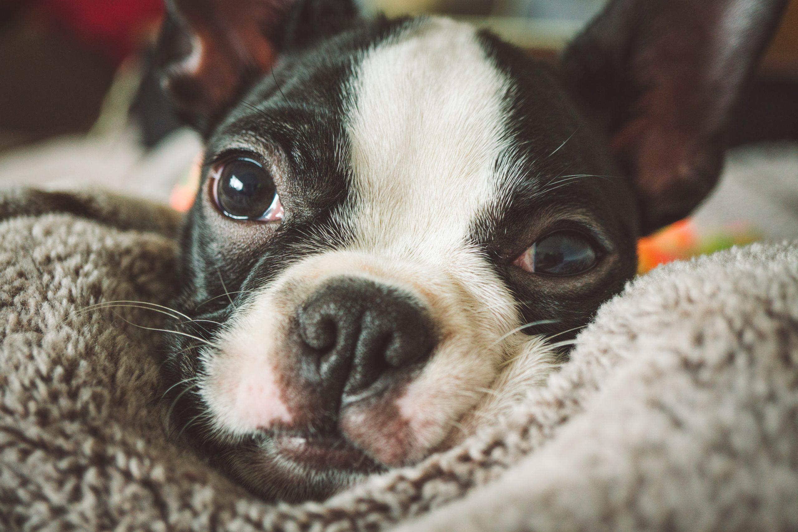 ストレスが病気を作ってる?愛犬のストレスサイン見逃していませんか
