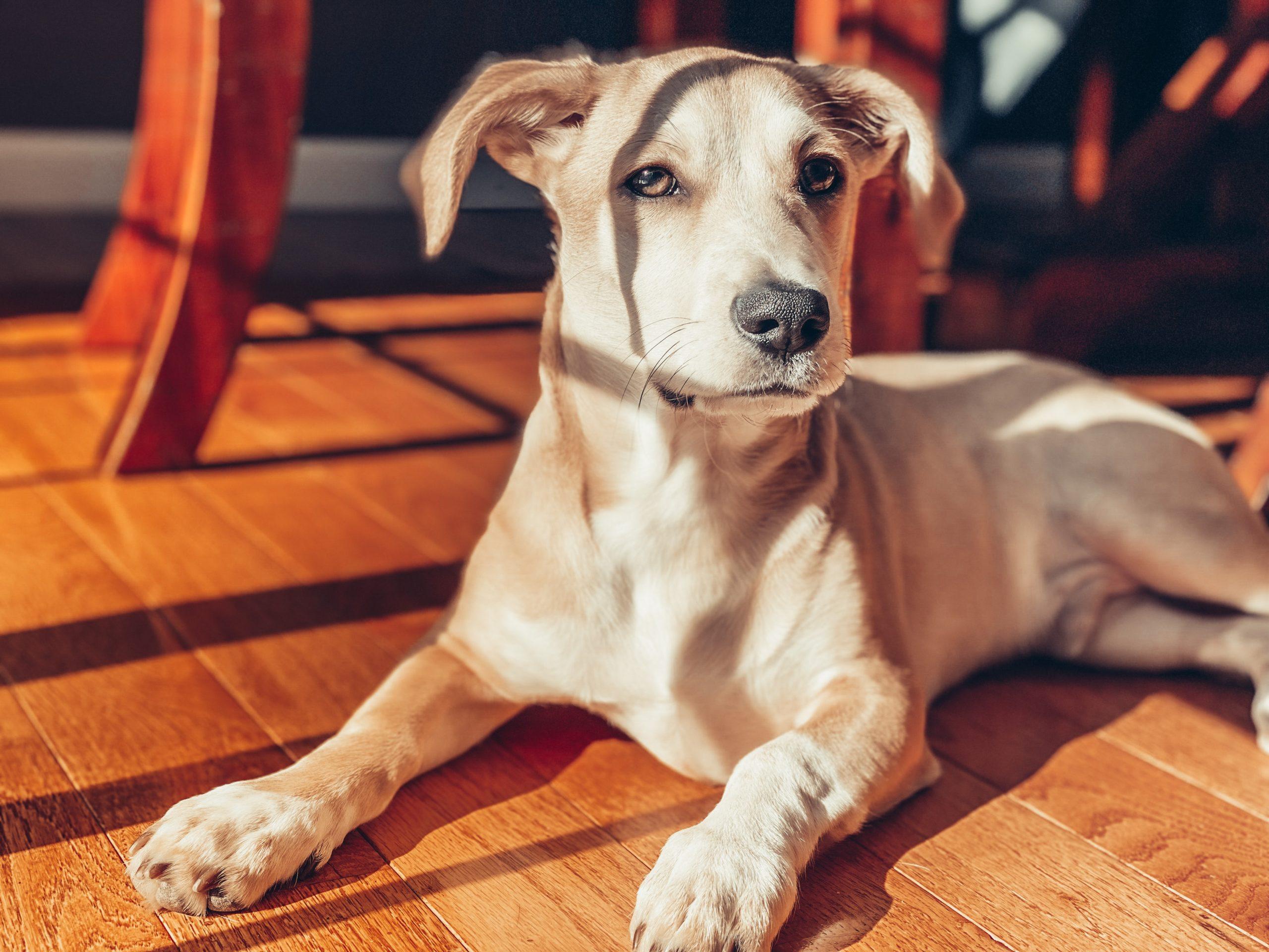 知っておこう!犬の認知症について