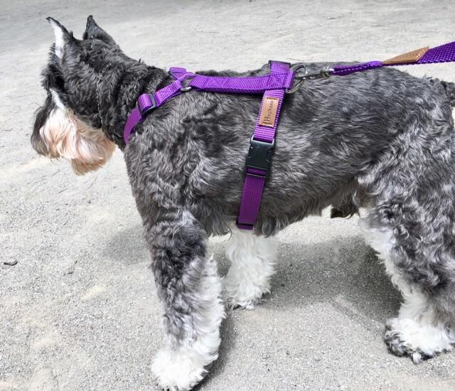 愛犬の体に優しい!世界27ヵ国で愛されるイタリア製ドッグハーネス「Haqihanaハキハナハーネス」