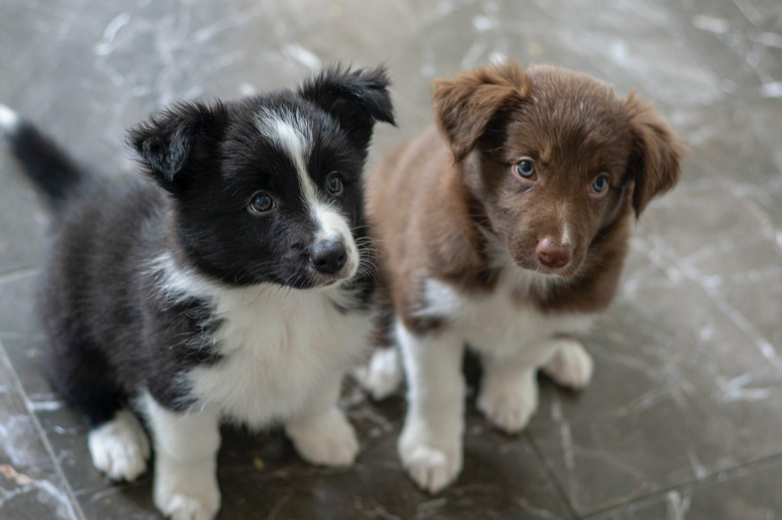 子犬には子犬用フードを!成長段階に応じた種類のある選りすぐりのドッグフードブランド